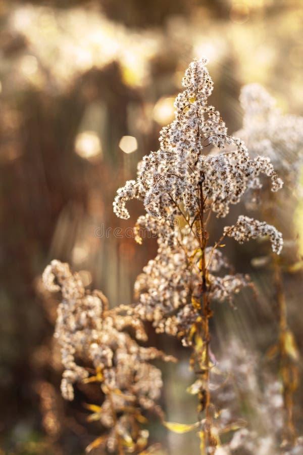 Droge bloemen en installaties royalty-vrije stock foto's