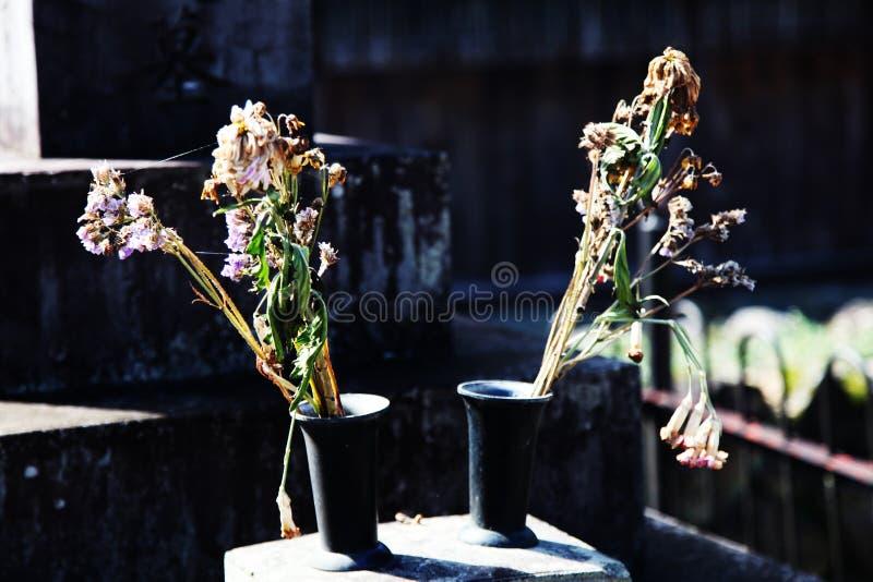 Droge bloemen in twee vazen stock afbeeldingen
