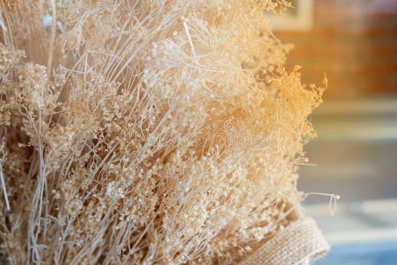 Droge bloemkoriander royalty-vrije stock afbeeldingen