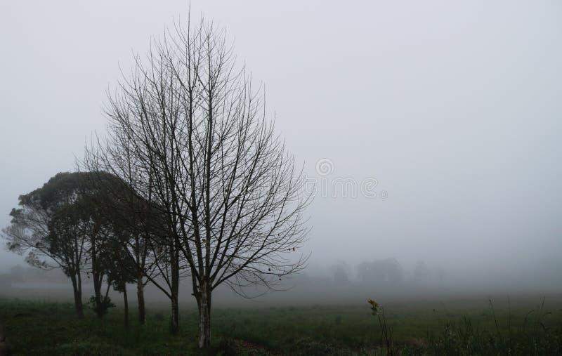 Droge bomen in een mist royalty-vrije stock afbeeldingen