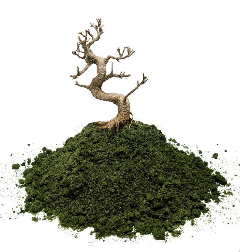 Droge bonsaiboom stock foto's