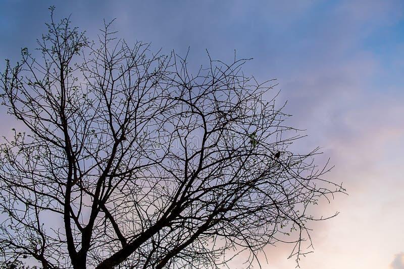 droge boom bij avond royalty-vrije stock afbeeldingen
