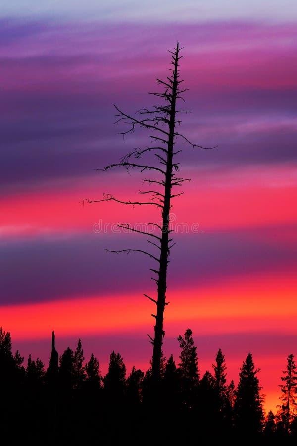 Download Droge Boom Bij Zonsondergang Stock Afbeelding - Afbeelding bestaande uit droog, boomstam: 54089081