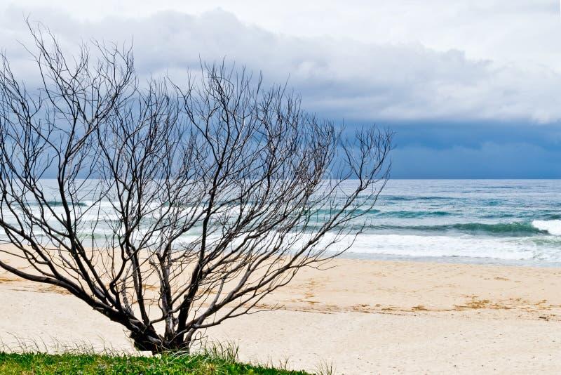 Droge boom op zandig strand royalty-vrije stock fotografie