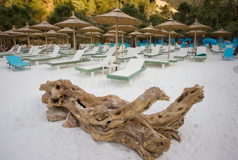 Droge boomstam en sunbeds op het strand royalty-vrije stock foto's