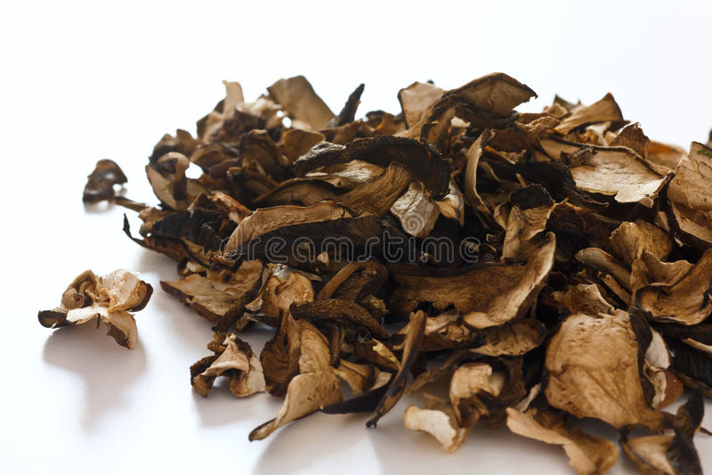 Droge bospaddestoelen royalty-vrije stock afbeeldingen