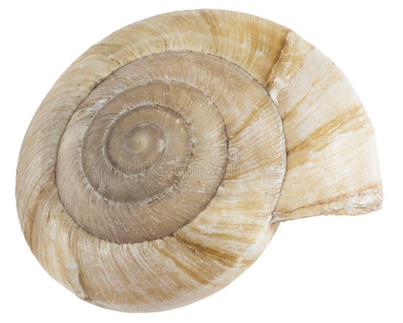 Droge bruine shell van geïsoleerd slakmacro, stock foto