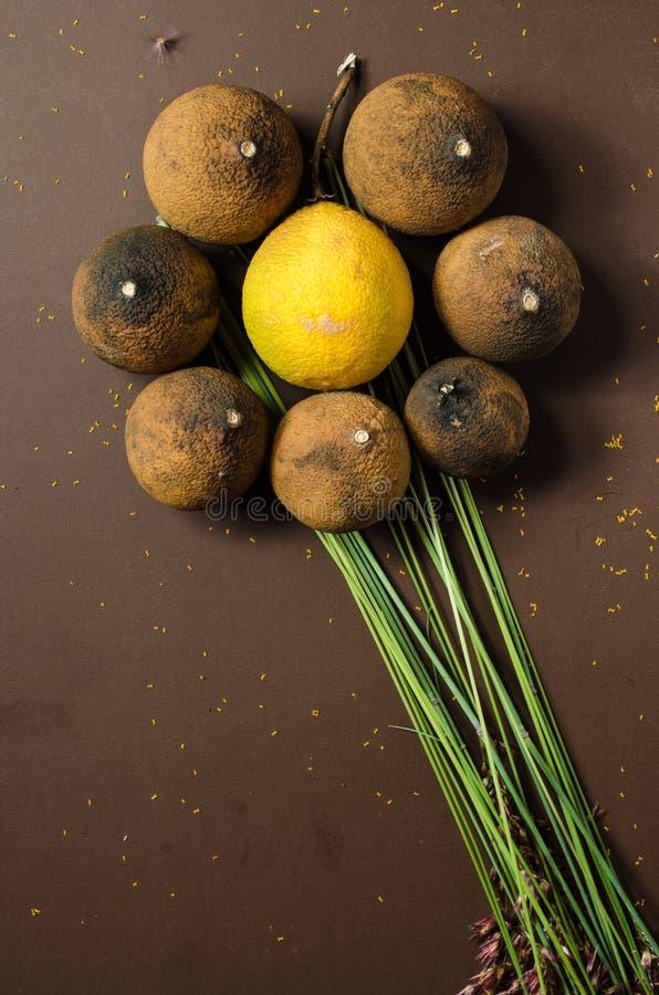 Droge citroenen in de vorm van bloem stock foto's