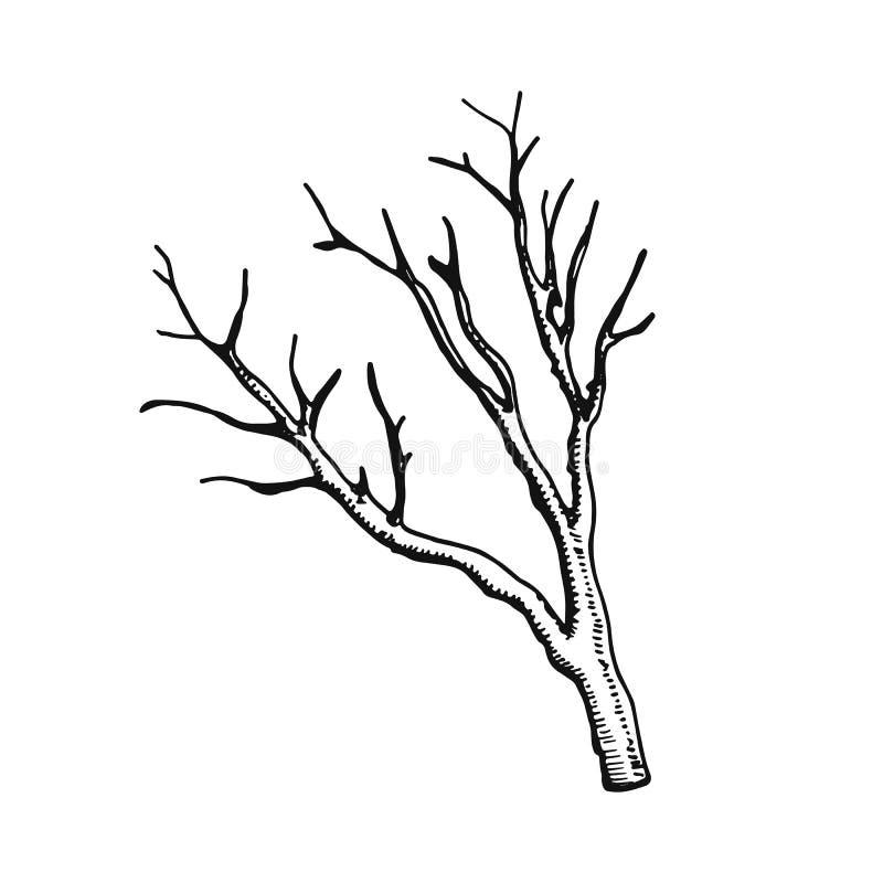 Droge de handtekening van de takje vectorillustratie vector illustratie