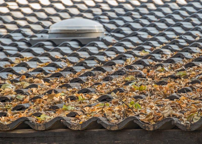 Droge de herfstbladeren op een betegeld dak royalty-vrije stock afbeeldingen