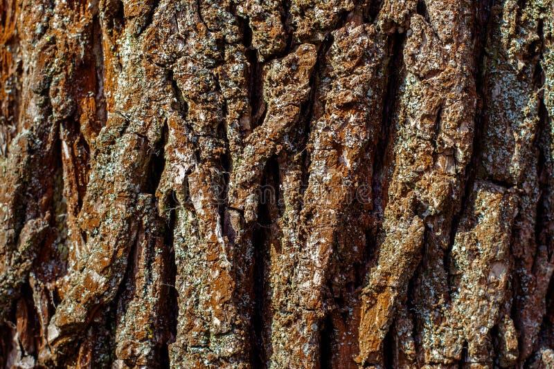 Droge de textuurachtergrond van de boomschors stock afbeelding
