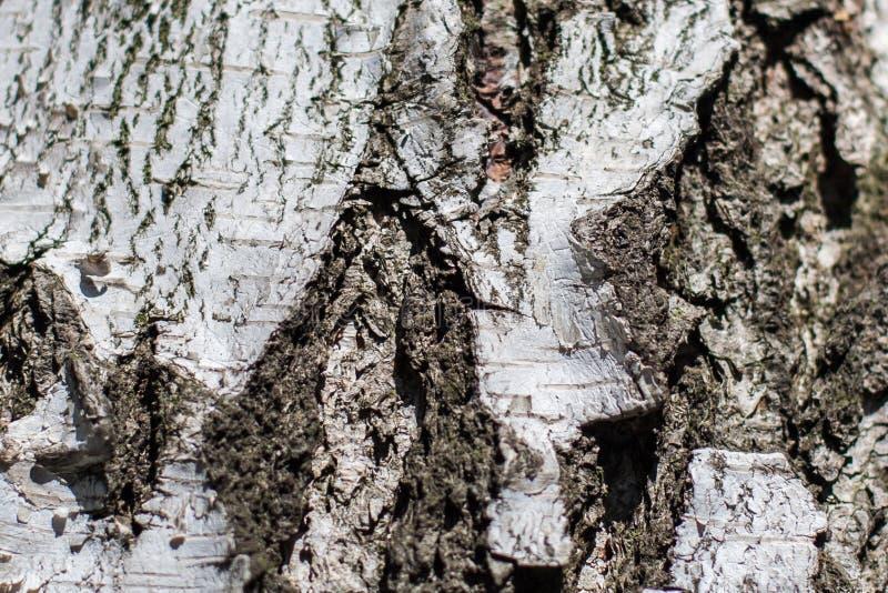 Droge de textuurachtergrond van de boomschors berk royalty-vrije stock foto's
