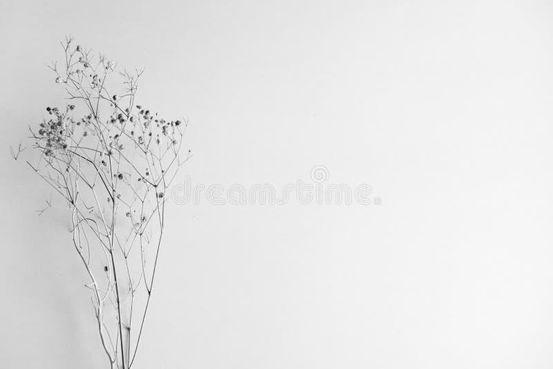 Droge die bloem op een witte achtergrond wordt ge?soleerd De ruimte van het exemplaar royalty-vrije stock fotografie