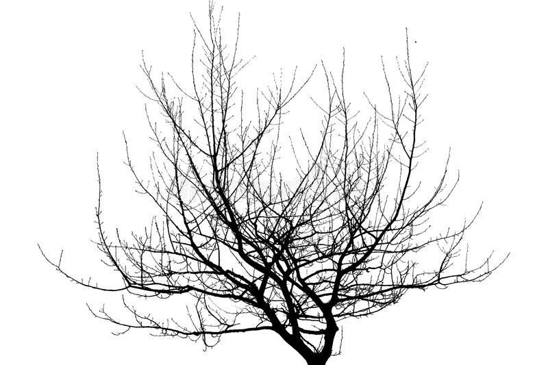 Droge die boomtakken op witte achtergrond worden geïsoleerd stock illustratie
