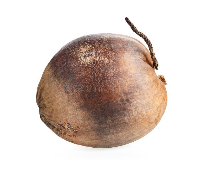 Droge die kokosnoot op witte achtergrond wordt geïsoleerd royalty-vrije stock afbeelding