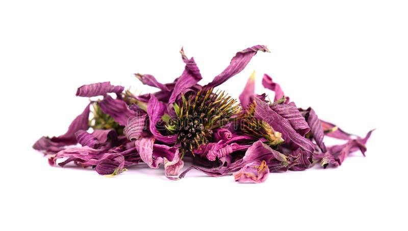 Droge Echinacea-bloemen, die op witte achtergrond worden geïsoleerd Geneeskrachtige kruiden royalty-vrije stock afbeelding