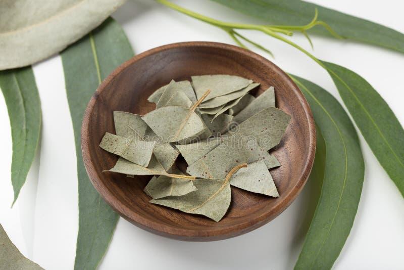 Droge en verse eucalyptusbladeren royalty-vrije stock fotografie