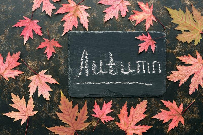 Droge esdoorn rode bladeren op een rustieke donkere achtergrond, uithangbord met de tekst-herfst Hoogste mening, exemplaarruimte  stock foto's