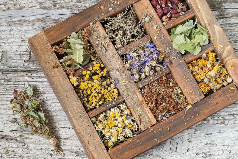Droge geneeskrachtige installatie in een oude houten doos stock fotografie