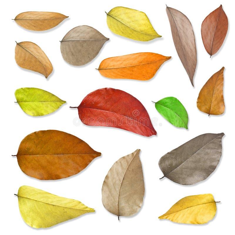 Droge geplaatste bladeren. stock foto