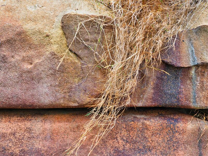 Droge gras groeit over zwaar geërodeerd en gepitte zandsteen stock fotografie