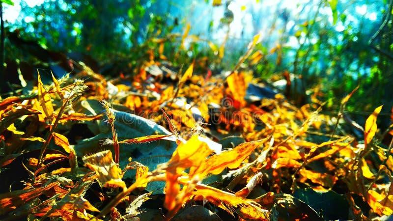 Droge grassen stock afbeelding