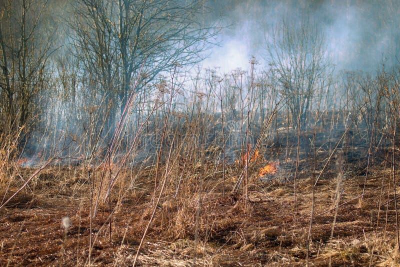 Droge grasuitbarstingen onder struiken, brand op struikengebied royalty-vrije stock foto