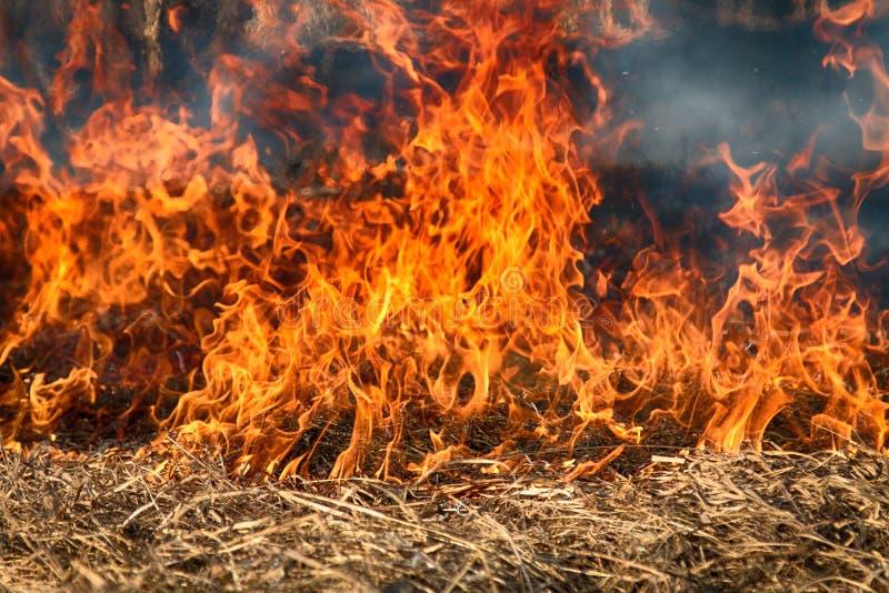 Droge grasuitbarstingen onder struiken, brand op struikengebied stock afbeeldingen