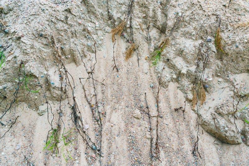 Droge horsetail op het zand royalty-vrije stock foto
