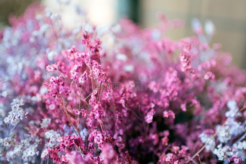 Droge kleurrijke het grasdecoratie van de knopbloem stock afbeeldingen