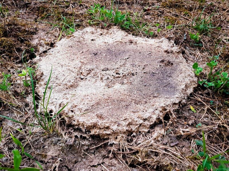 Droge koemest ter plaatse en groen gras, organische meststof voor het milieu Hoogste mening stock afbeeldingen