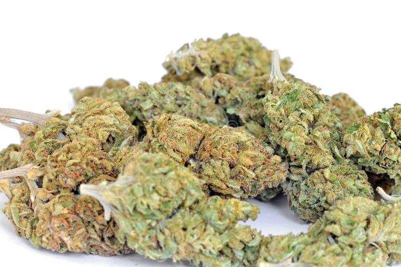 Droge marihuanaknoppen op witte achtergrond stock fotografie