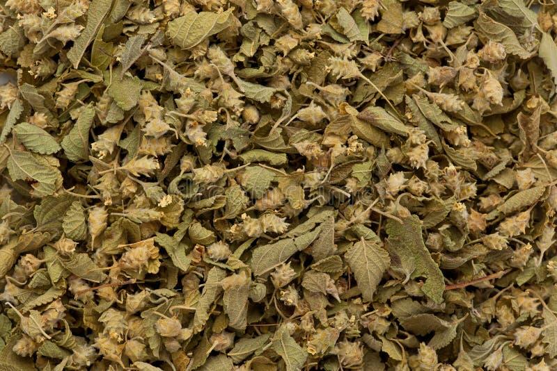 Droge Mexicaanse Orego stock afbeelding