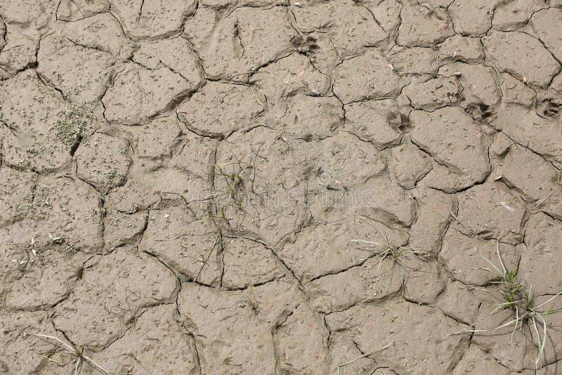 Droge modder dichtbij het rivier droge jaar stock foto