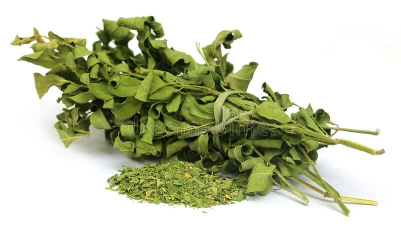 Droge moringa bladeren royalty-vrije stock fotografie
