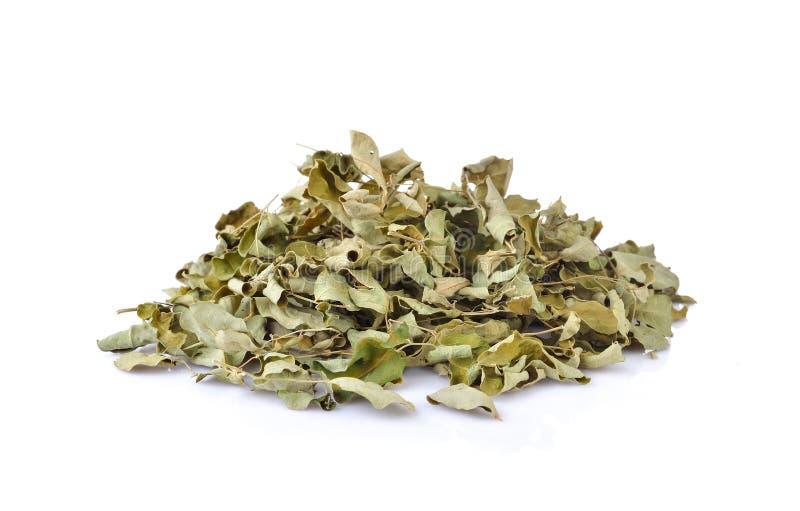 Droge moringa bladeren, geneeskrachtige installatie op witte achtergrond royalty-vrije stock afbeeldingen