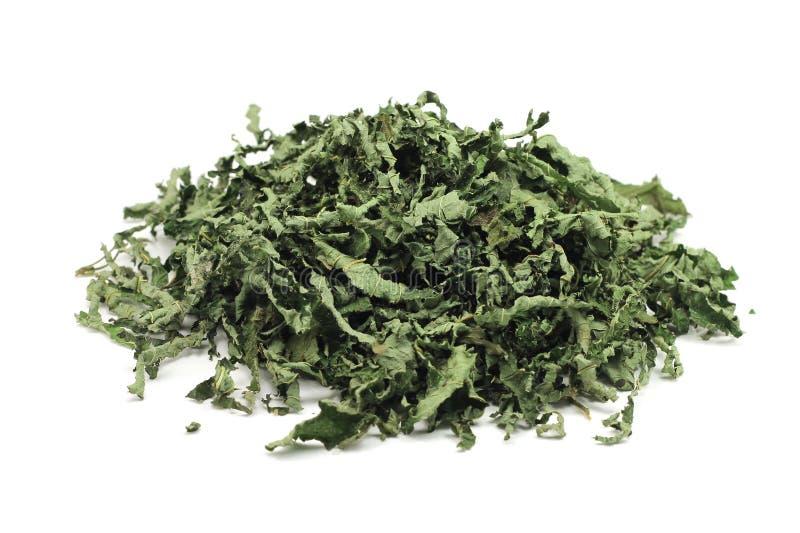 Droge pepermuntbladeren stock afbeeldingen