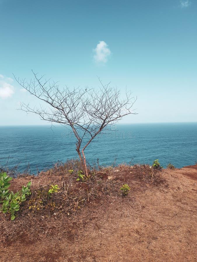 Droge pijnboom op de klip over oceaan en hemelachtergrond stock foto