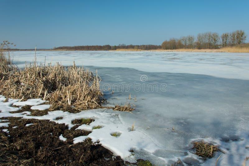 Droge riet en sneeuw op de rand van een bevroren meer Horizon en blauwe hemel royalty-vrije stock foto's