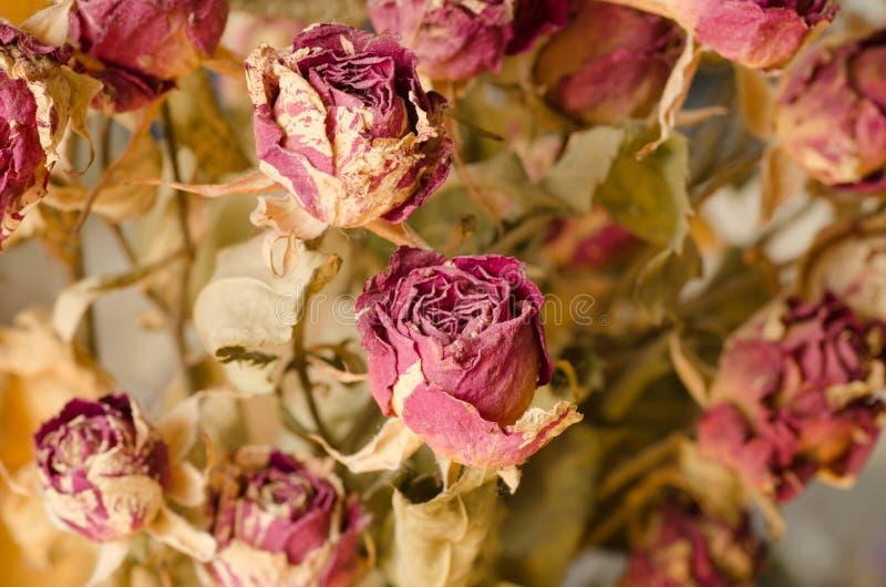 Droge rozen stock afbeeldingen