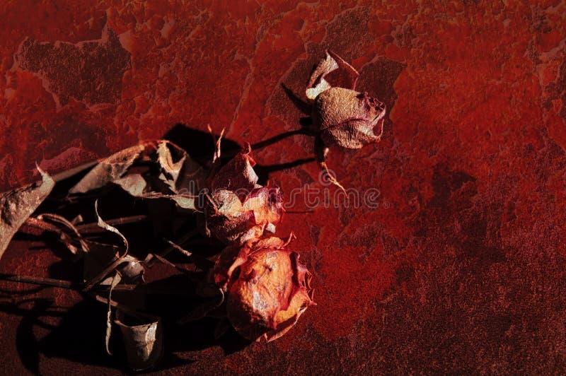 Droge rozen op rode grunge een achtergrond stock foto