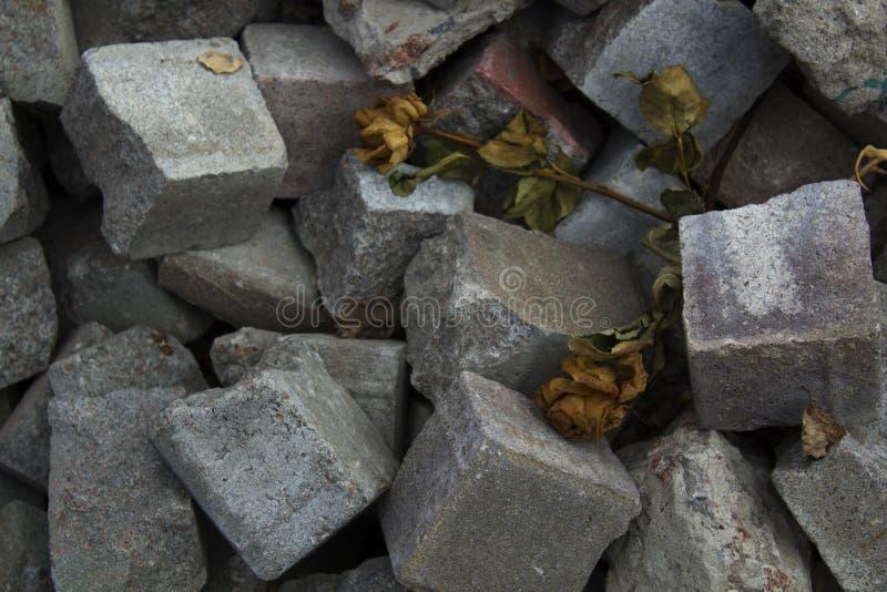 Droge rozen op stapel van steenbakstenen Veteranen, RIP, rust in vredes herdenkingsconcept stock fotografie