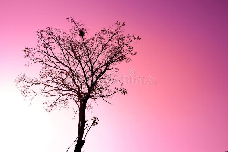 Droge silhouetboom met de van de de liefdeuitdrukking van het vogelnest achtergrond van de de hemel mooie aard roze stock foto