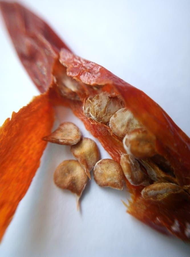 Droge Spaanse pepers royalty-vrije stock afbeelding