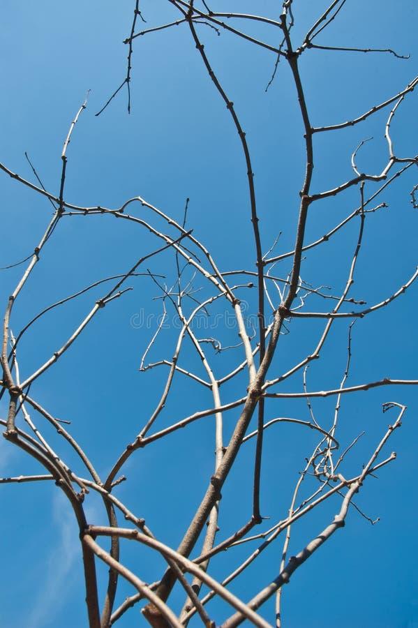 droge tak op blauwe hemel stock fotografie