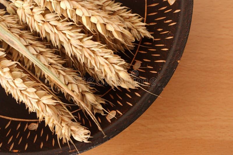 Droge tarwe in een kom stock fotografie