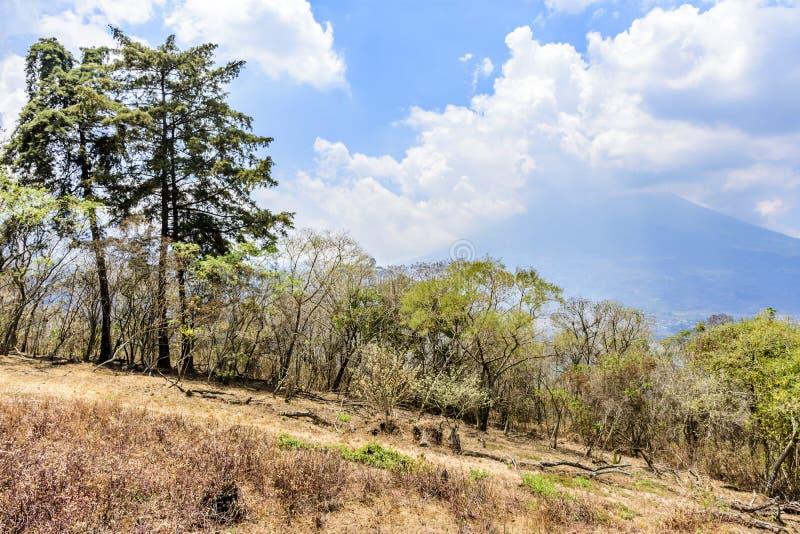 Droge vegetatie op helling & Agua-vulkaan erachter, Antigua, Guatemala stock foto