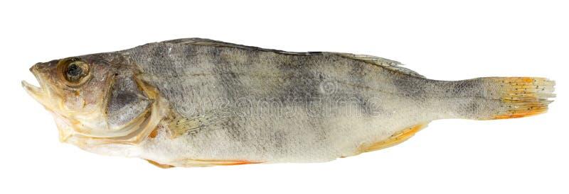 Droge vissen die op een witte achtergrond worden geïsoleerd royalty-vrije stock foto