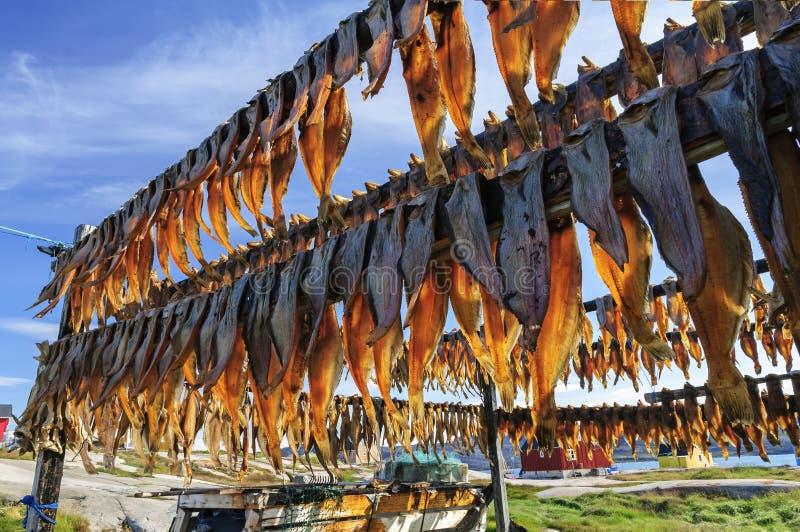 Droge vissen in Rodebay-regeling stock fotografie
