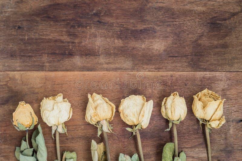 Droge witte rozen stock fotografie